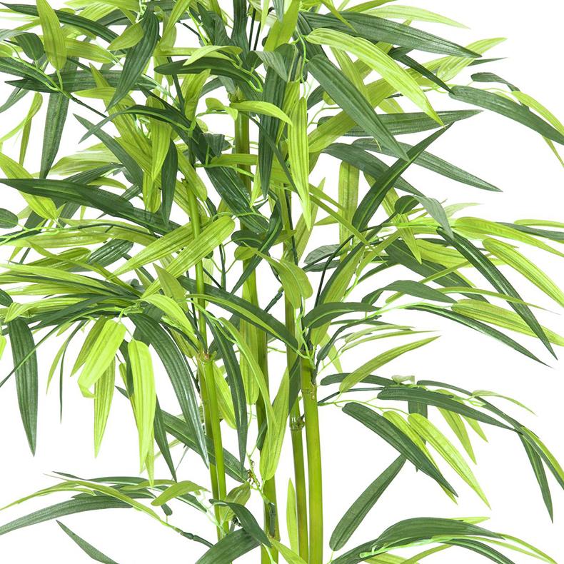 EUROPALMS 120cm Bambu vihreillä ruo'oilla sekä puutarhurin ruukulla, aidot bambut on heinäkasvien ryhmä, johon kuuluu noin 90 sukua ja näihin yhteensä yli tuhat lajia, yksittäinen bambu versoo suoraan maasta vuosittain useita versoja, ja niiden halkaisija riippuu emokasvin iästä, pituutta tulee päivittäin lisää. Bambut, kuten muutkin heinäkasvit, kasvavat maan rajasta eikä kärjestään. Bambuja kasvaa villinä laajalla alueella ja viljeltynä lähes kaikkialla. Laajimmat bambumetsät ovat Aasian vuoristoissa, joissa bambuja kasvaa jopa 4 000 metrin korkeudessa. Bambun varsi on erittäin kuitupitoinen, ja sitä käytetään rakennusmateriaalina, polttopuuna, työkalujen ja tarveastioiden valmistukseen sekä tekstiilien raaka-aineena. Nuoria versoja syödään keitettyinä. Isopandat ja kultapandat käyttävät bambuja pääravintonaan