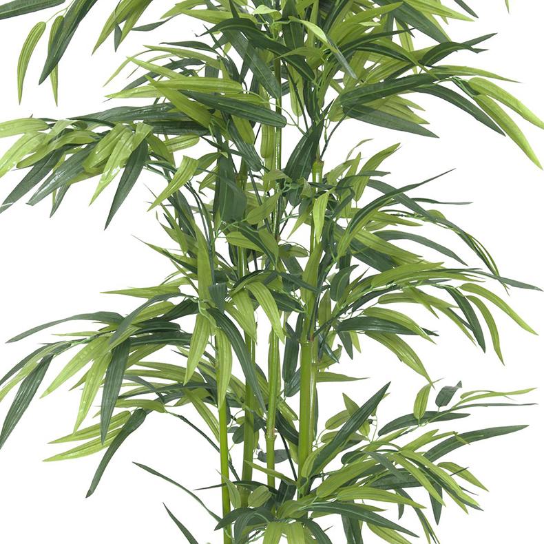 EUROPALMS 150cm Bambu vihreillä ruo'oilla sekä puutarhurin ruukulla, aidot bambut on heinäkasvien ryhmä, johon kuuluu noin 90 sukua ja näihin yhteensä yli tuhat lajia, yksittäinen bambu versoo suoraan maasta vuosittain useita versoja, ja niiden halkaisija riippuu emokasvin iästä, pituutta tulee päivittäin lisää. Bambut, kuten muutkin heinäkasvit, kasvavat maan rajasta eikä kärjestään. Bambuja kasvaa villinä laajalla alueella ja viljeltynä lähes kaikkialla. Laajimmat bambumetsät ovat Aasian vuoristoissa, joissa bambuja kasvaa jopa 4 000 metrin korkeudessa. Bambun varsi on erittäin kuitupitoinen, ja sitä käytetään rakennusmateriaalina, polttopuuna, työkalujen ja tarveastioiden valmistukseen sekä tekstiilien raaka-aineena. Nuoria versoja syödään keitettyinä. Isopandat ja kultapandat käyttävät bambuja pääravintonaan