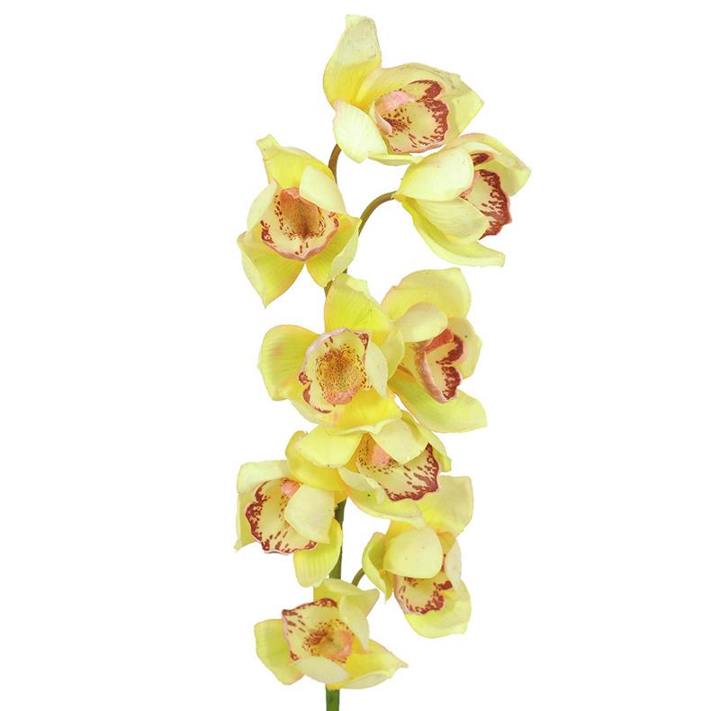 EUROPALMS 90cm Kymbidi orkidea keltainen. Erittäin näyttävä ja tyylikäs. Cymbidiums pray, yellow. Simple and elegant