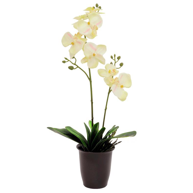 EUROPALMS 57cm Orkidea, väri kerma, mus, discoland.fi