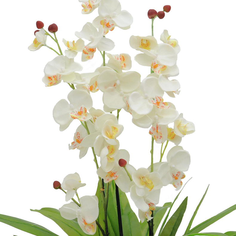 EUROPALMS 80cm Orkidea, kolmella kukinnolla, jossa valkoiset väriset kukat ja punaiset nuput, vahamaiset lehdet, musta deco-ruukku. Orchid, white. Impressive orchid bush, intensively colored