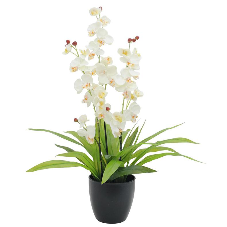 EUROPALMS 80cm Orkidea, kolmella kukinno, discoland.fi