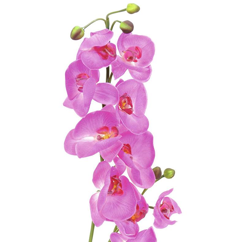 EUROPALMS 100cm Orkidea, väri purppura, aitojen nykyisten orkideoiden esi-isät olivat olemassa maapallolla jo noin 80 miljoonaa vuotta sitten.