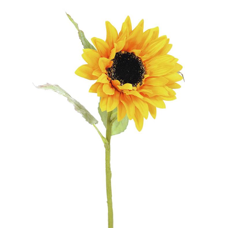 EUROPALMS 70cm Auringonkukka, aurinkoa kotiin