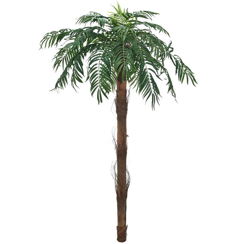 EUROPALMS 190cm Välimerentaatelipalmu. Phoenix palm tree. Quality date palm for highest demands