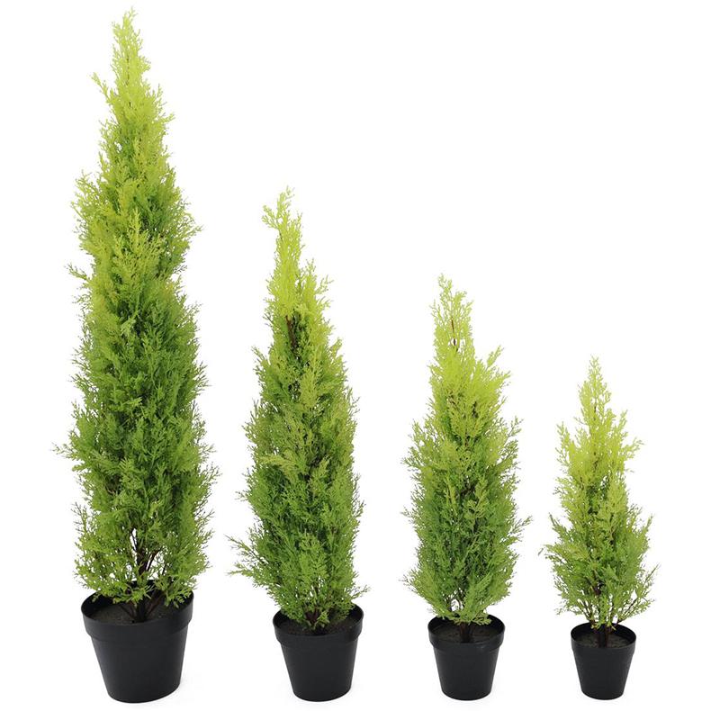 EUROPALMS 60cm Sypressi Leyland, deco-ruukku. Aidot Sypressit ovat ainavihantia, 5–40 metriä korkeita havupuita tai pensaita. Niiden neulaset ovat pehmeitä, 2–5 millimetrin pituisia, kasvavat pareittain toisiaan vastapäätä ja pysyvät puussa 3–5 vuotta. Sypressejä kasvaa laajalti pohjoisella pallonpuoliskolla lämpimässä ilmastossa kuten Pohjois- ja Keski-Amerikassa, Luoteis-Afrikassa, Lähi-idässä, Himalajalla, Etelä-Kiinassa ja Pohjois-Vietnamissa.