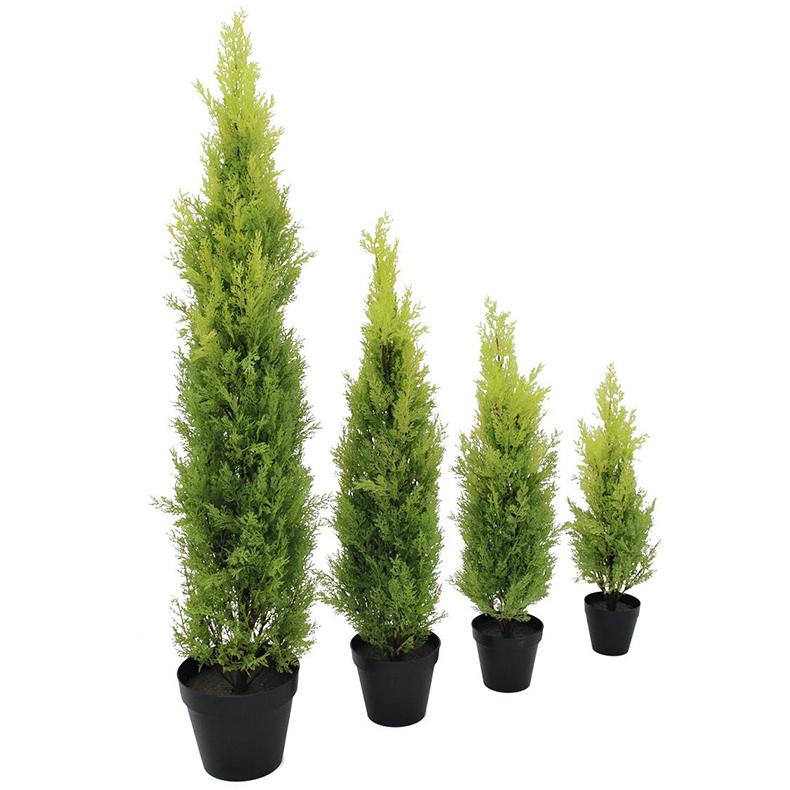 EUROPALMS 75cm Sypressi Leyland deco-ruukku Aidot Sypressit ovat ainavihantia, 5–40 metriä korkeita havupuita tai pensaita. Niiden neulaset ovat pehmeitä, 2–5 millimetrin pituisia, kasvavat pareittain toisiaan vastapäätä ja pysyvät puussa 3–5 vuotta. Sypressejä kasvaa laajalti pohjoisella pallonpuoliskolla lämpimässä ilmastossa kuten Pohjois- ja Keski-Amerikassa, Luoteis-Afrikassa, Lähi-idässä, Himalajalla, Etelä-Kiinassa ja Pohjois-Vietnamissa.