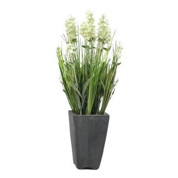 EUROPALMS 45cm Laventeli kerma, kukkiva , discoland.fi