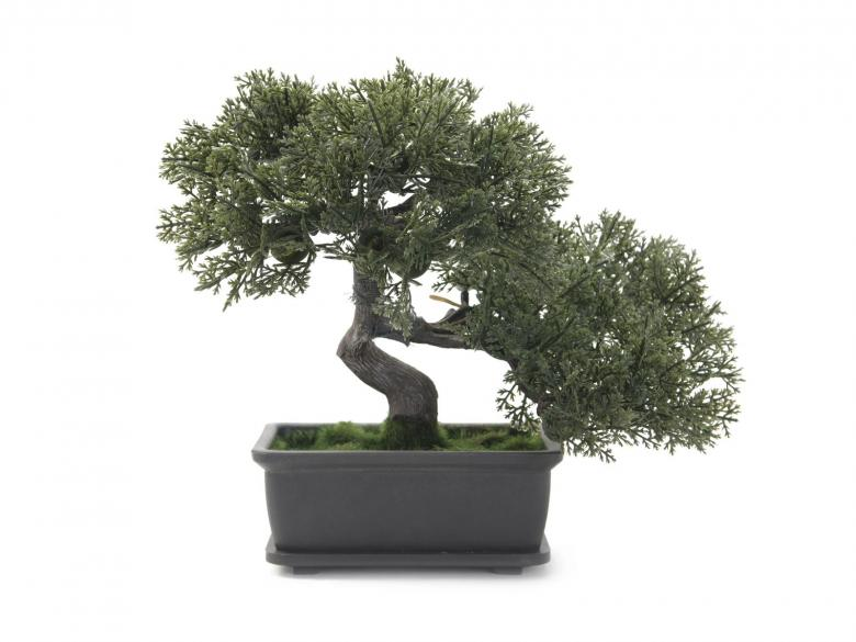 EUROPALMS 21cm Bonsai deco-ruukussa Bonsai Tree, ideal for table decoration