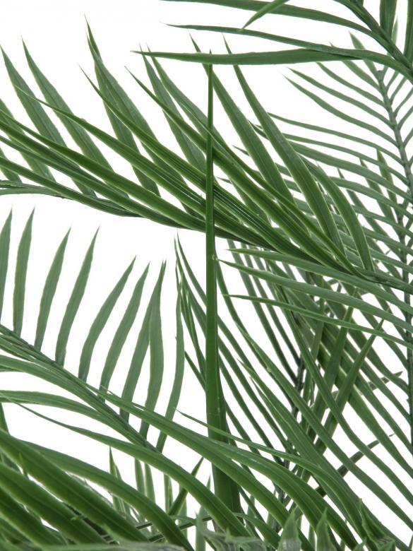 EUROPALMS 150cm Kentiapalmu, aito Kentiapalmu kotoisin pieneltä Lord Howen saarelta Australiasta. Myymämme tuotteet ovat tekokasveja. Se on luokiteltu luonnollisessa kasvuympäristössään uhatuksi lajiksi, vaikka varsinaista sukupuuton vaaraa sillä ei olekaan. Kentianpalmu on suosittu huonekasvi meillä pohjoisessa, etelämpänä sitä käytetään myös paljon puutarhakasvina, sillä se sietää jopa ajoittaiset lyhyet pakkasetkin. Meillä se pärjää vain huoneessa sisällä, joskin kesällä se ei pahastu terassilla olostakaan. Monien mielestä kentiapalmu on yksi kauneimmista palmuista. Kentiapalmu on hidaskasvuinen palmu, joka kasvaa kuitenkin lopulta noin 10 metriä korkeaksi.