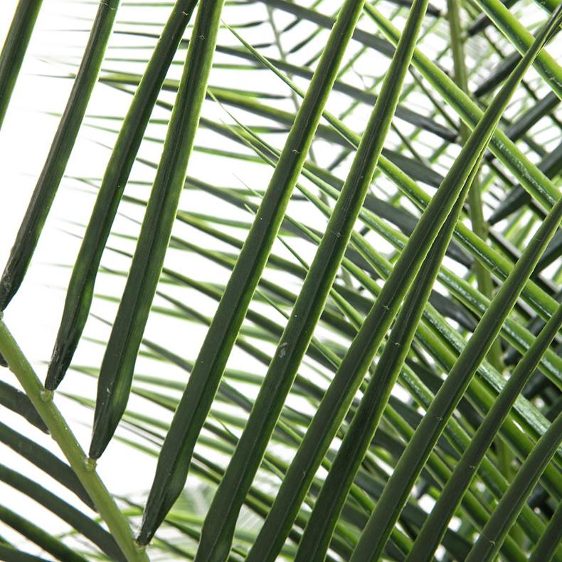 EUROPALMS 220cm Deluxe Kanariantaatelipalmu. Taatelipalmu on palmulaji, jota kasvatetaan ensisijaisesti sen ihmisravinnoksi soveltuvan hedelmän vuoksi ja se on ollut ihmisen perusravintona tuhansia vuosia Lähi-Idässä. Se kasvaa 15-25 metrin korkuiseksi puuksi. Joskus sen juurakosta voi kasvaa useampikin runko. Sen lehdet ovat pariluiskaiset ja voivat kasvaa 3 metrin pituisiksi.