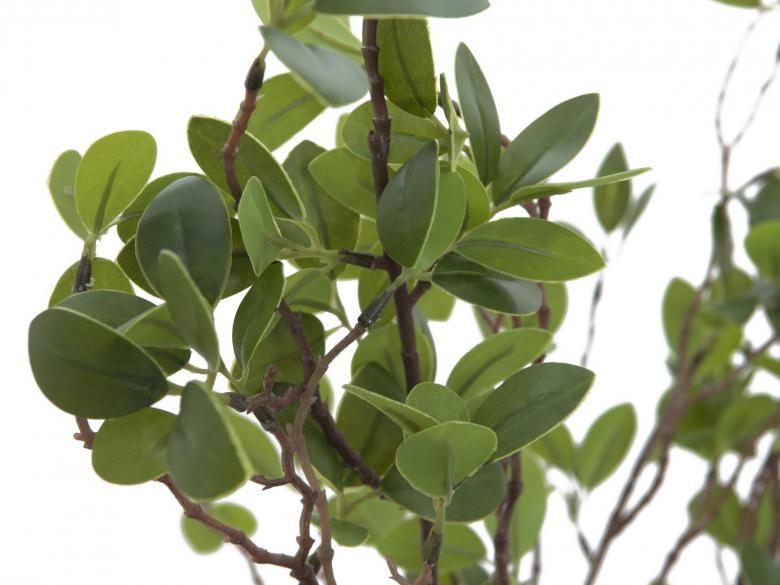 EUROPALMS 120cm Ikivihreä pensas peltiruukussa
