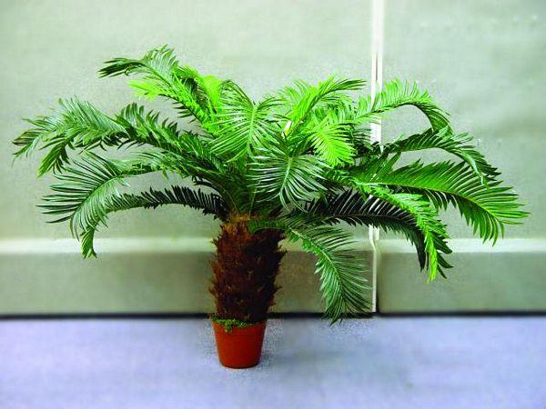 DECO POISTUNUT TUOTE...... 90cm Cycus palmbush high-grade
