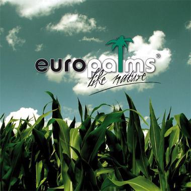 EUROPALMS Palmut sekä Viherkasvit Tuote, discoland.fi