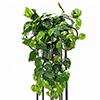 LOPPU!!60cm Kultaköynnös, vihreä. Pothos bush,