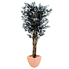 EUROPALMS 180cm Limoviikuna, musta, decoration high tech.  Ficus tree black multi trunk. Originally