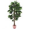 180cm Viidakko Mangopuu. Jungle tree Mango. Succes