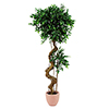 170cm Limoviikuna bonsai-rungolla. Limoviikuna on