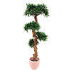 EUROPALMS 120cm Bonsaipuu. Bonsai wood tree. Classy bonsai Wood Tree for superior ambience