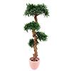 120cm Bonsaipuu todella upea 4800 lehdellä, premi