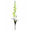 90cm Tarhamiekkalilja, sitruunanvihreä. Gladiolus