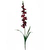 90cm Tarhamiekkalilja eli Gladiolus, v�ri violetti, discoland.fi