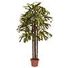 200cm Lady-palmu, monis�vyiset vihre�t lehdet, eri, discoland.fi