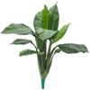 90cm Viirivehka vehkakasvien heimoon kuuluva suku.