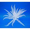 60cm Miekkasaniainen, valkoista muovia, ei ole UV-