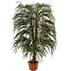 EUROPALMS 215cm Pajupuu aito runko liaaneilla, 2720 lehte�. Willow Nature trunk with lianas, very go