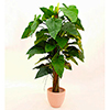 EUROPALMS 150cm Sademets�vehka. Rainforest philodendron. Realistic and incredibly voluminous leafage