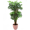 EUROPALMS 250cm Keisari Bambupuu. Emperor bamboo tree. Classy bamboo tree for exacting decorations