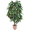 165cm Mangopuu hedelmillä tyylikäs ja tuuhea, ai
