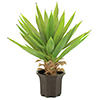 EUROPALMS 50cm Jukkapalmupensas. Yucca palm bush. Yucca bush with artificial trunk and very natural