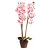80cm Orkidea rose ruukussa., discoland.fi