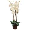 80cm Orkidea väri valkoinen ruukusssa, tyylikäst
