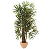 EUROPALMS 200cm Lady-palmu, aidon oloinen. Raphis palm tree, slim natural trunks with palm fiber
