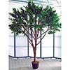 250cm Jättimäinen Olivipuu (öljypuu) oliiveilla