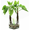 EUROPALMS 50cm Vehka deco-lasimaljassa. Pothos in decorative glass vase