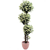 EUROPALMS 160cm P�iv�nkakkarapuu. Daisy tree. Trunk with lianawood and shiny leaves