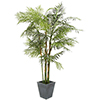 EUROPALMS 280cm Cycus-putkipalmu. Cycus tube palm. Voluminous Cycus tube palm for the highest expect