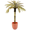 EUROPALMS 180cm Kultainen Palmu. Golden Palm Tree. An absolute eye-catcher, trunk with palm fiber ma