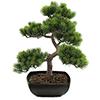 50cm Bonsai-mänty deco-ruukussa, aito bonsai eli