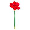 72cm Amaryllis punainen, red