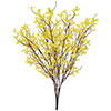 60cm Onnenpensas Forsythia bush