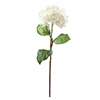 76cm Hortensia kermanvärinen, aidot hortensiat on