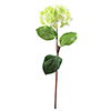 76cm Hortesia vihreä.