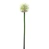 55cm Ukkolaukka kermanvärinen. Allium, cream. Sin