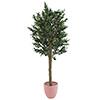 200cm Oliivipuu (öljypuu) paksulla rungolla ja ol