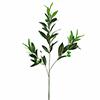 6kpl 68cm Oliivinoksa oliiveilla. Sopii loistavast
